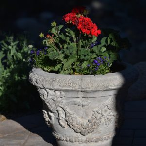 Red Geraniums and Blue Lobelia